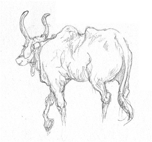 Das Bild zeigt eine Zeichnung einer Kuh